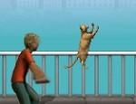 لعبة رمي القطة