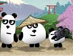 دببة الباندا فلي اليابان